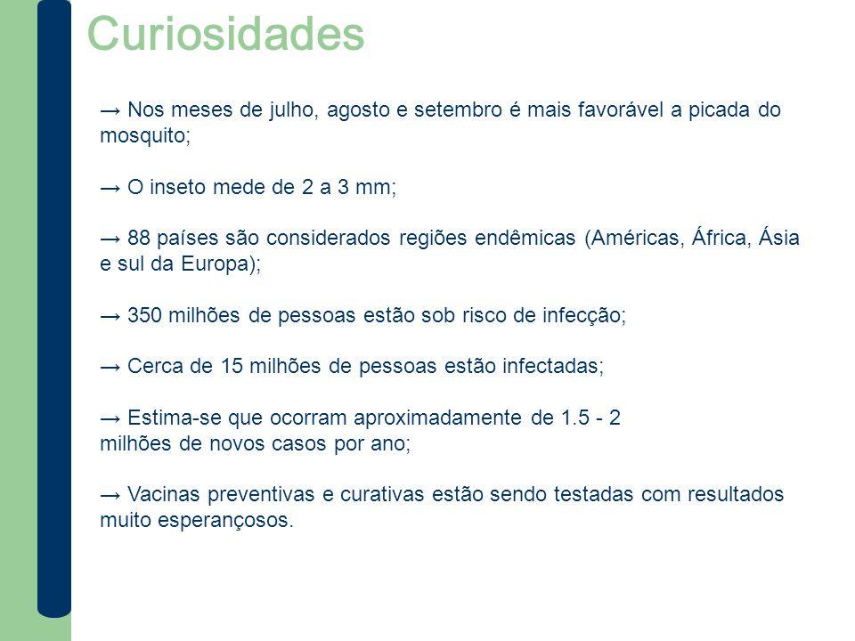 Curiosidades → Nos meses de julho, agosto e setembro é mais favorável a picada do mosquito; → O inseto mede de 2 a 3 mm;