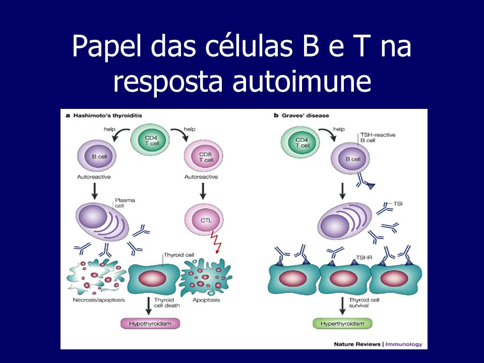 Papel das células B e T na resposta autoimune