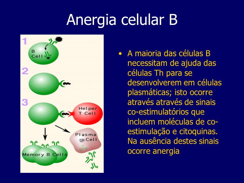 Anergia celular B