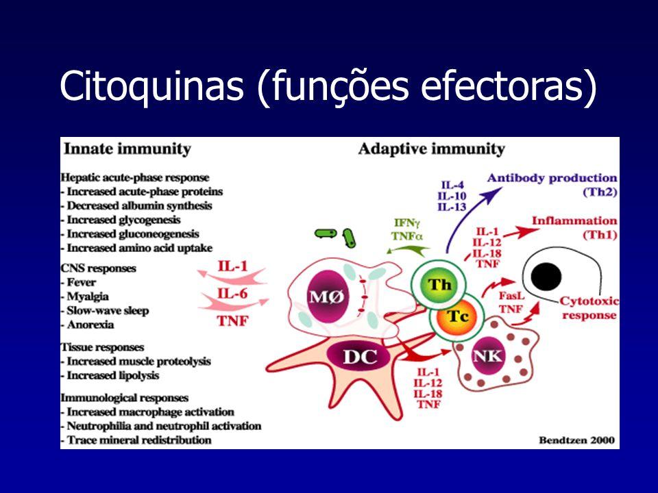 Citoquinas (funções efectoras)