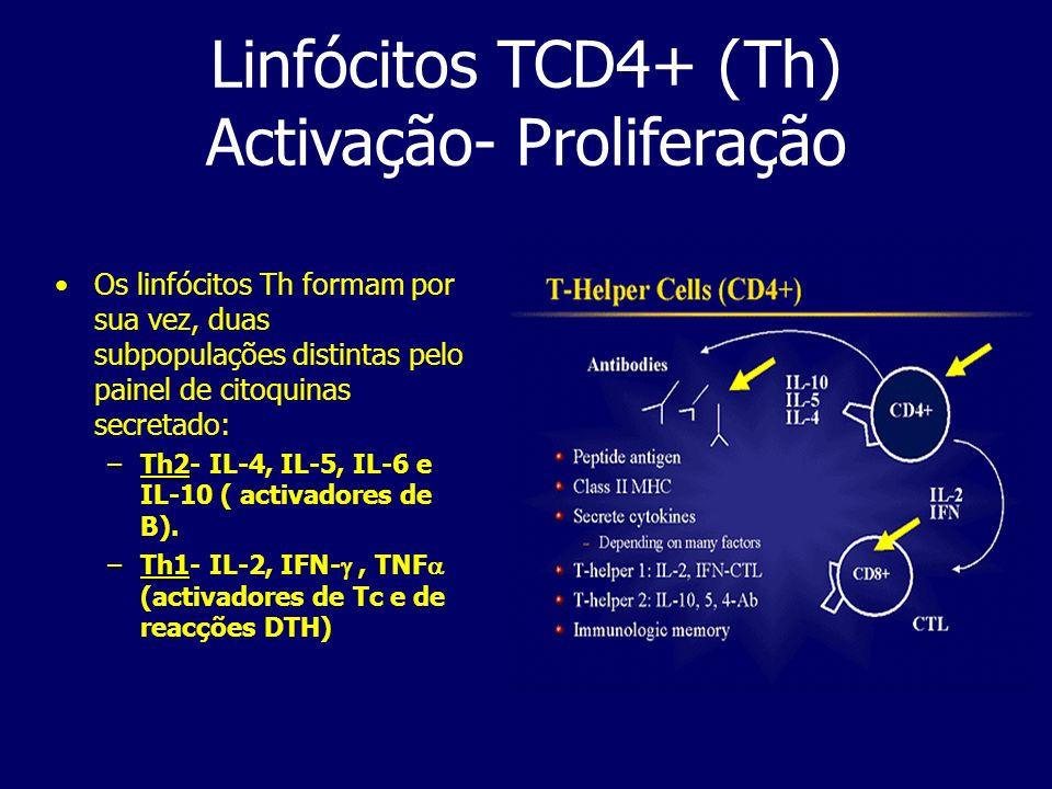 Linfócitos TCD4+ (Th) Activação- Proliferação