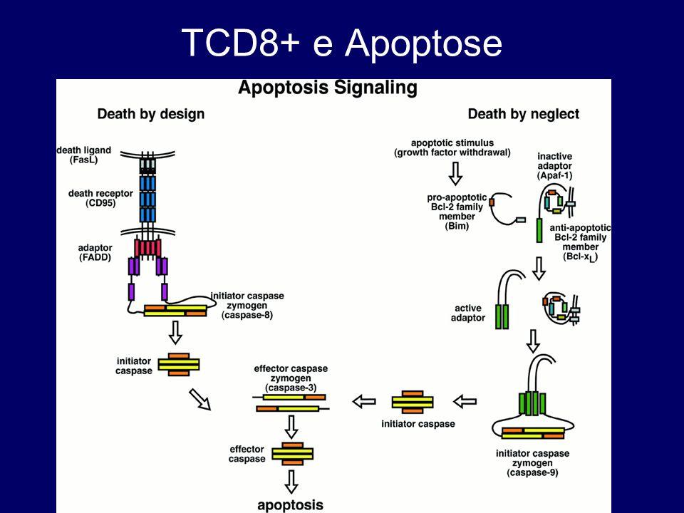 TCD8+ e Apoptose
