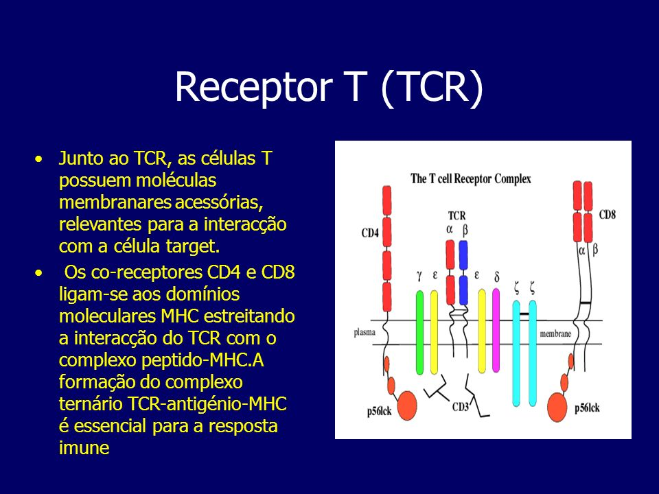 Receptor T (TCR) Junto ao TCR, as células T possuem moléculas membranares acessórias, relevantes para a interacção com a célula target.