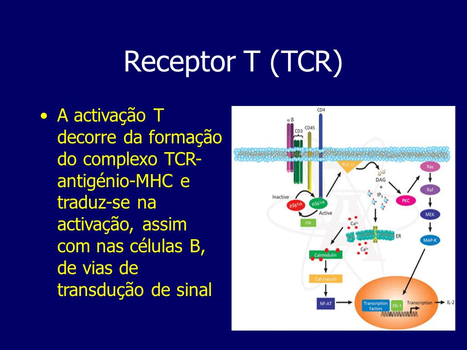 Receptor T (TCR)
