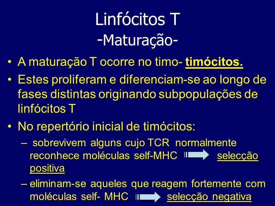 Linfócitos T -Maturação-