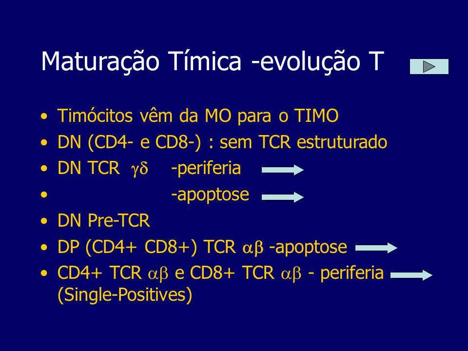 Maturação Tímica -evolução T