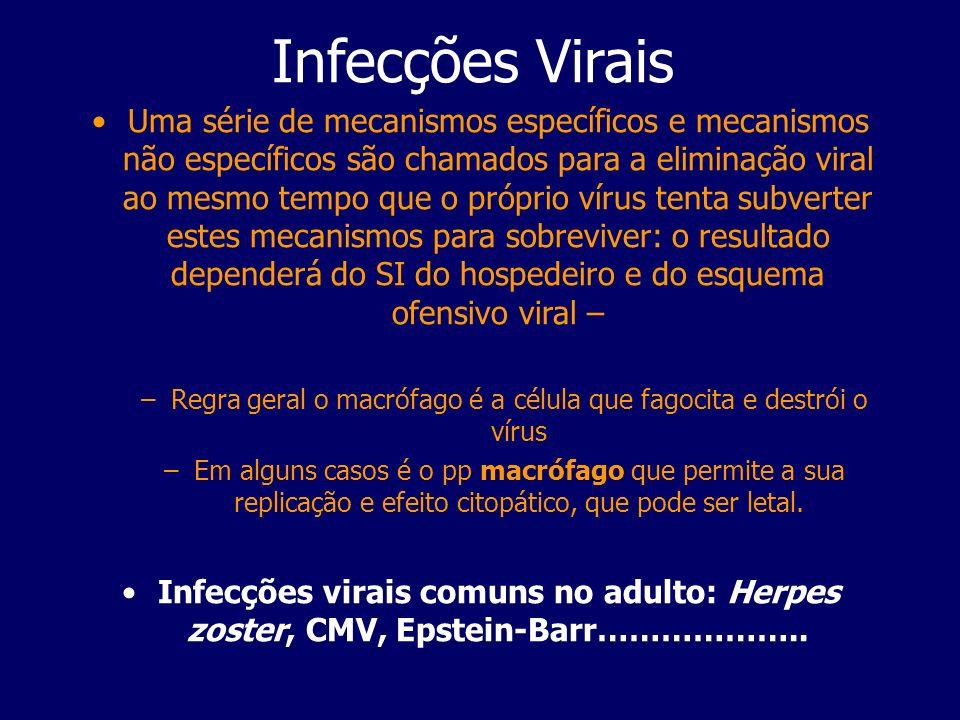 Regra geral o macrófago é a célula que fagocita e destrói o vírus