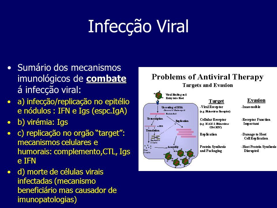 Infecção Viral Sumário dos mecanismos imunológicos de combate á infecção viral: a) infecção/replicação no epitélio e nódulos : IFN e Igs (espc.IgA)
