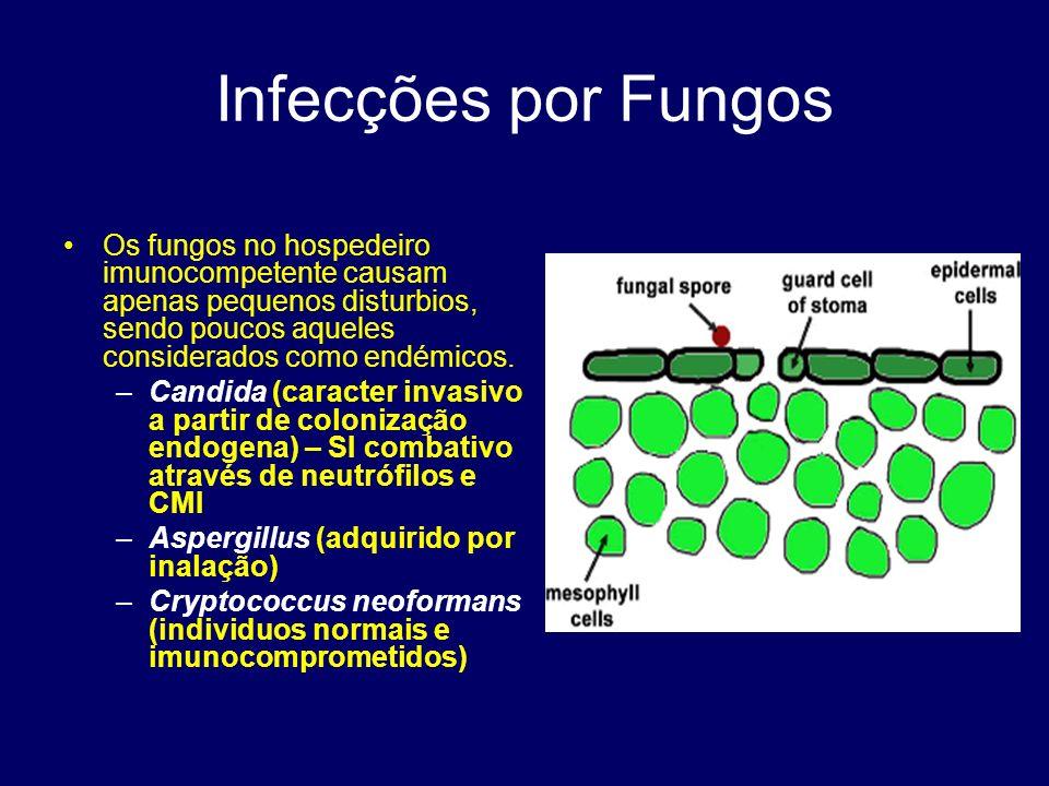 Infecções por Fungos Os fungos no hospedeiro imunocompetente causam apenas pequenos disturbios, sendo poucos aqueles considerados como endémicos.