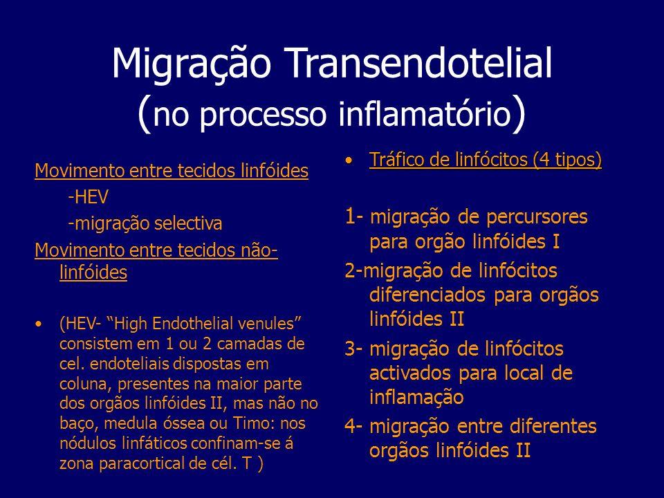 Migração Transendotelial (no processo inflamatório)