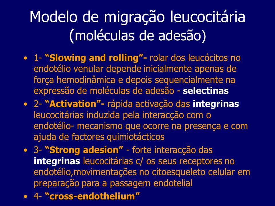 Modelo de migração leucocitária (moléculas de adesão)