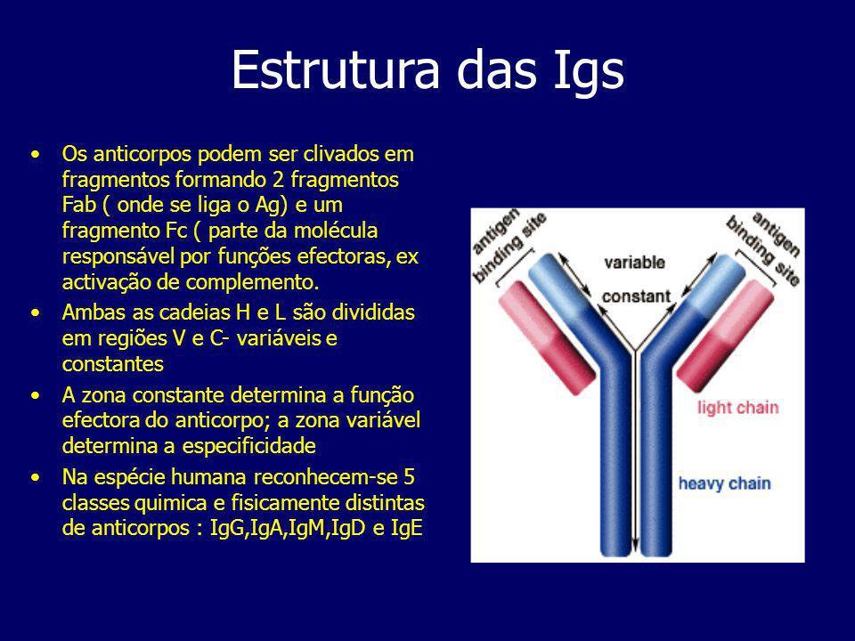 Estrutura das Igs