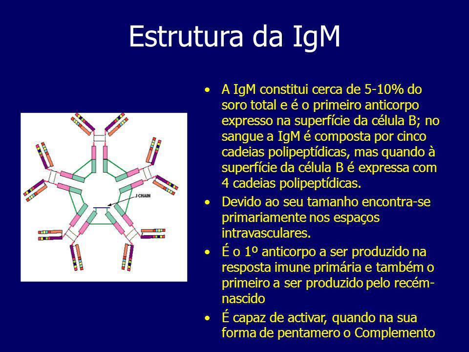 Estrutura da IgM