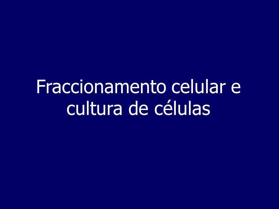 Fraccionamento celular e cultura de células