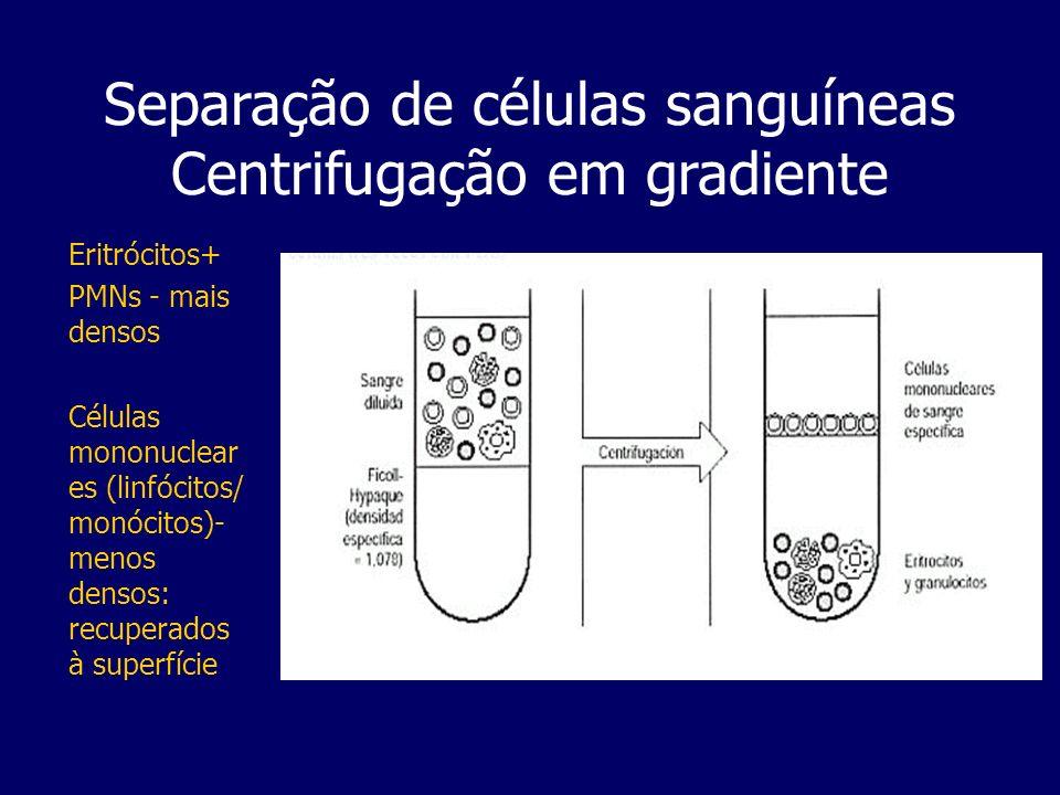 Separação de células sanguíneas Centrifugação em gradiente