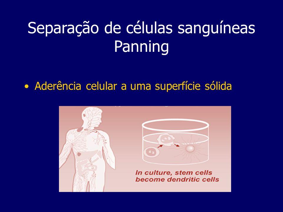 Separação de células sanguíneas Panning