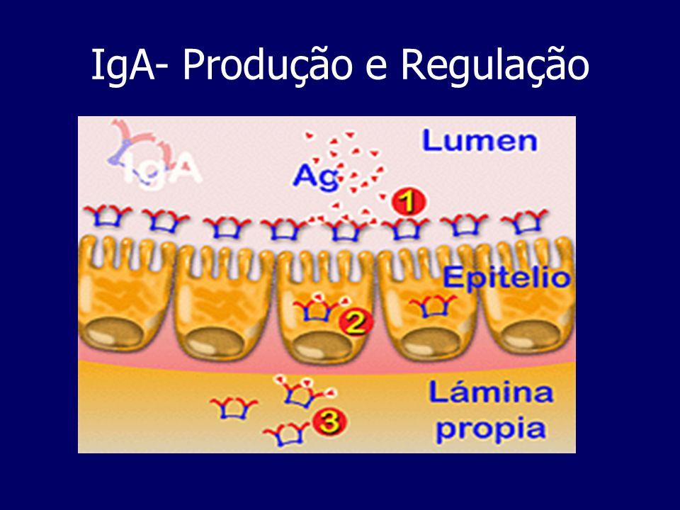 IgA- Produção e Regulação