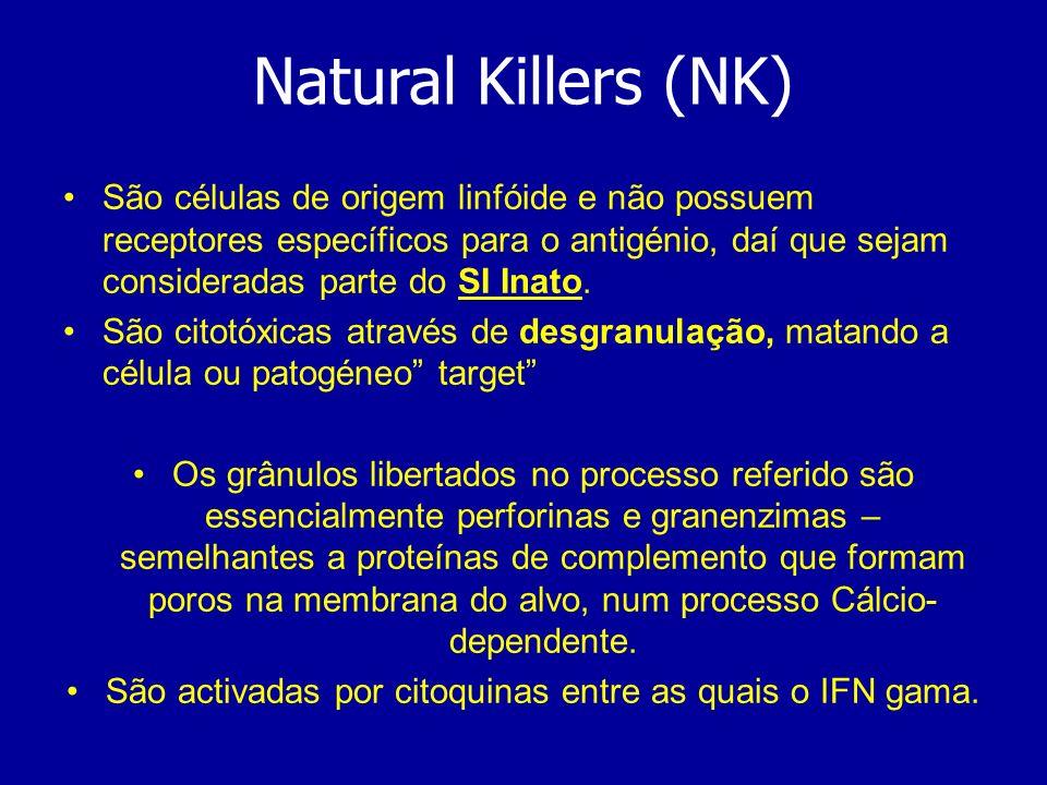 São activadas por citoquinas entre as quais o IFN gama.