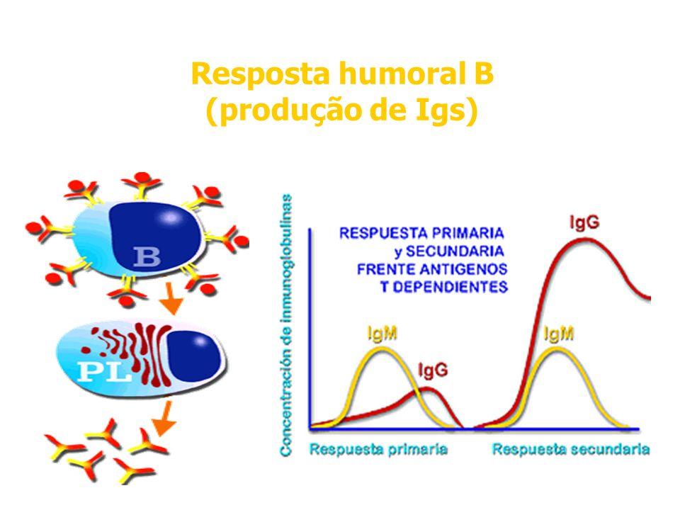 Imunidade Adaptativa Resposta humoral B (produção de Igs)