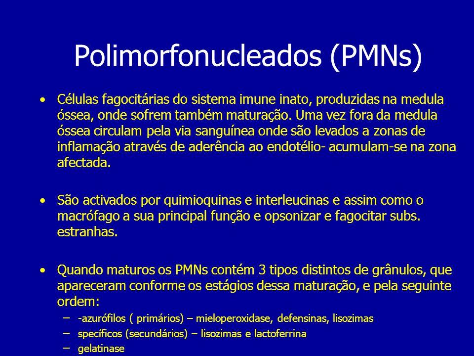 Polimorfonucleados (PMNs)