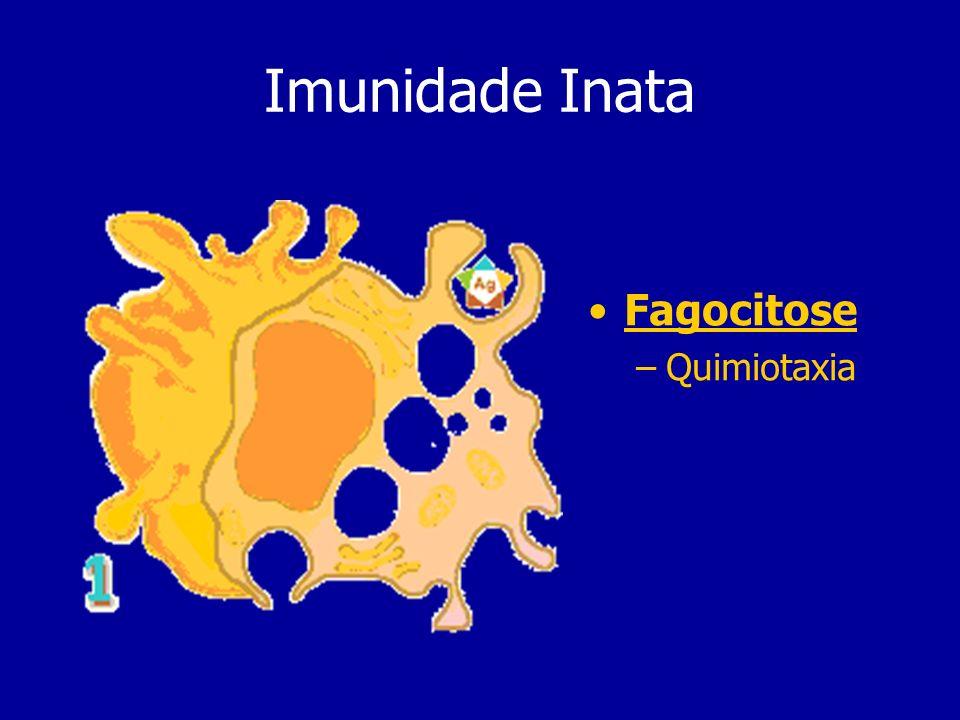 Imunidade Inata Fagocitose Quimiotaxia