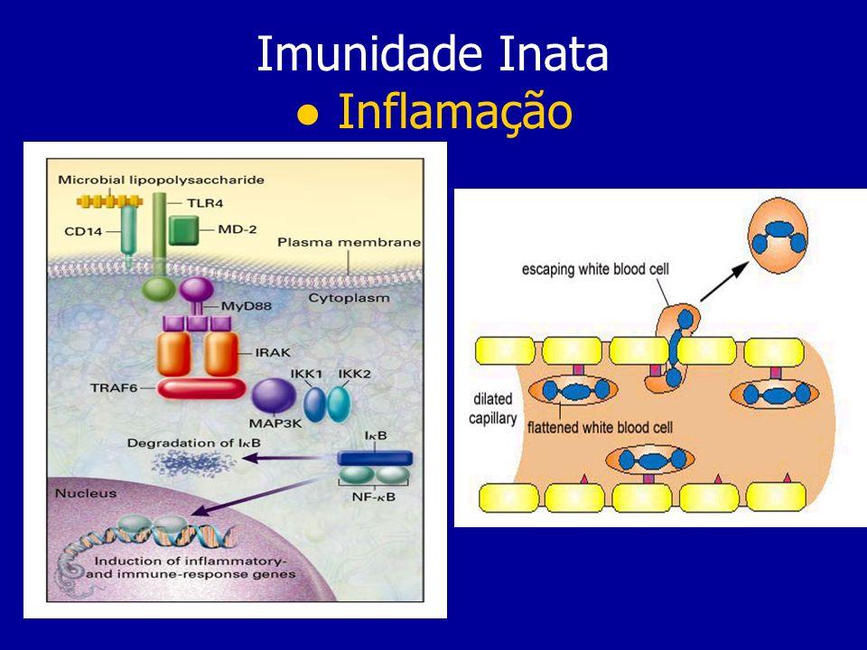 Imunidade Inata ● Inflamação