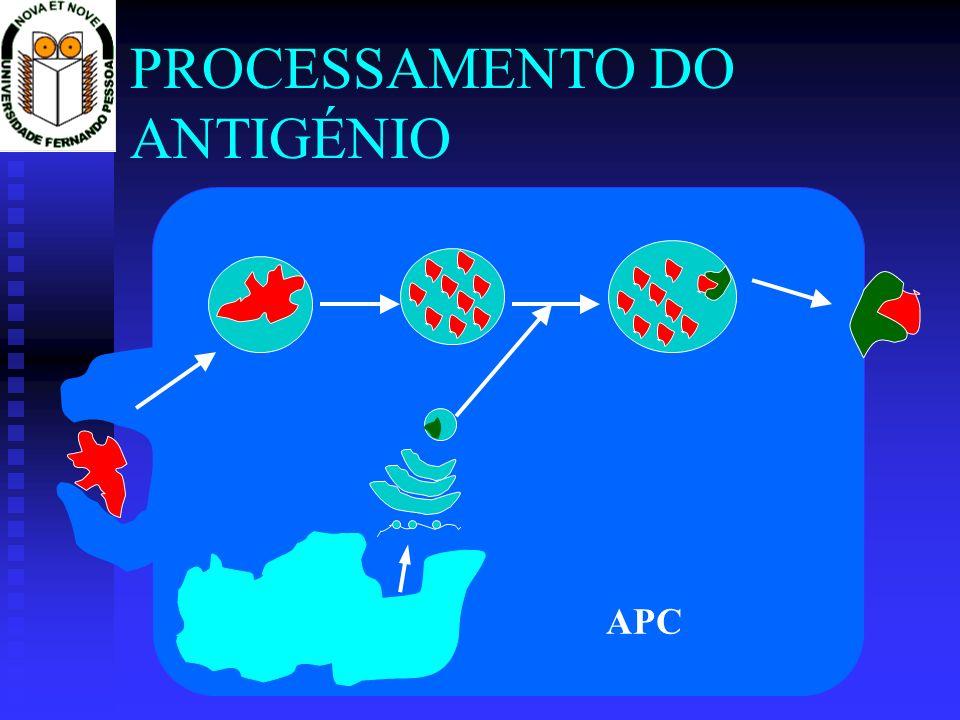 PROCESSAMENTO DO ANTIGÉNIO