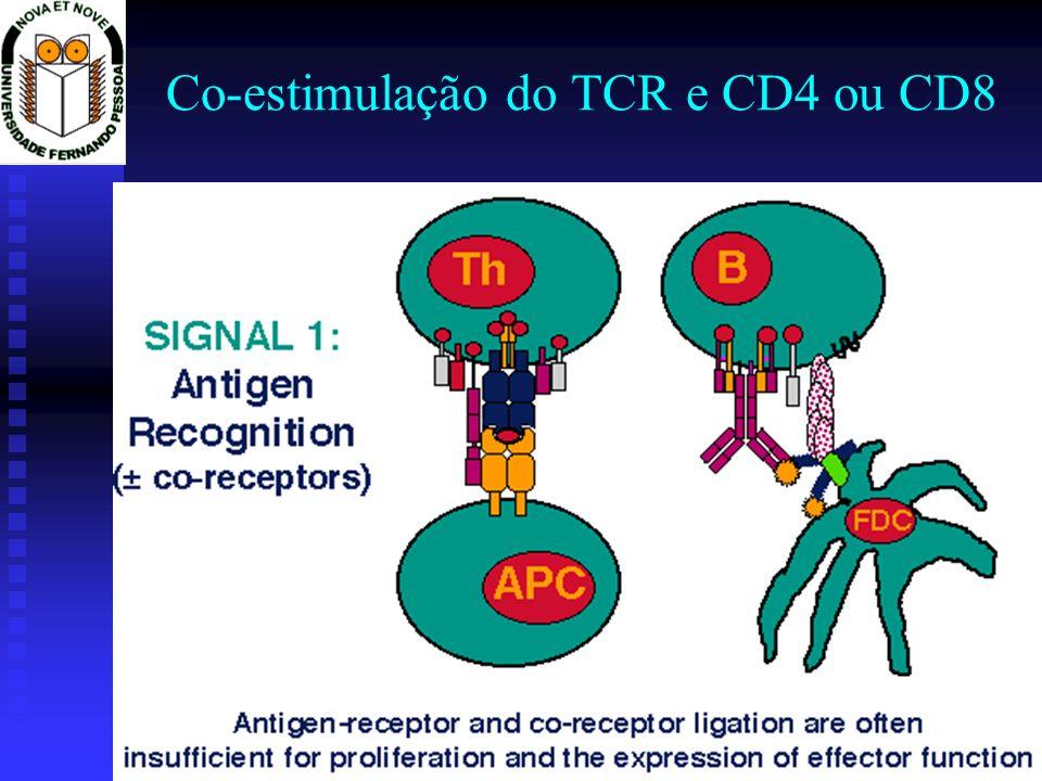 Co-estimulação do TCR e CD4 ou CD8