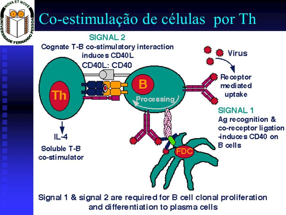 Co-estimulação de células por Th