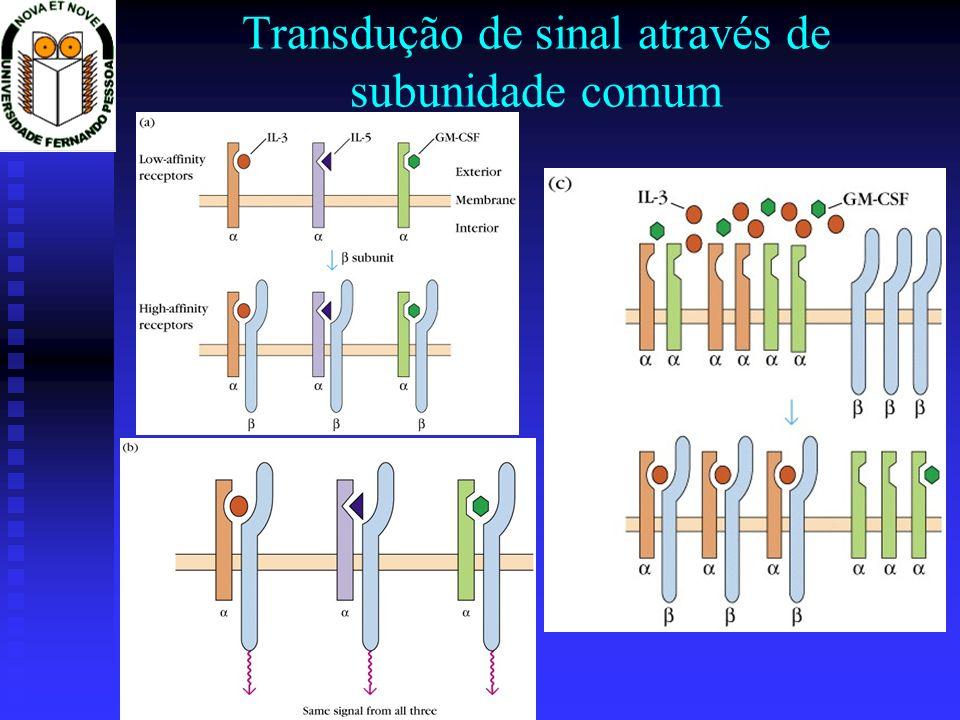 Transdução de sinal através de subunidade comum