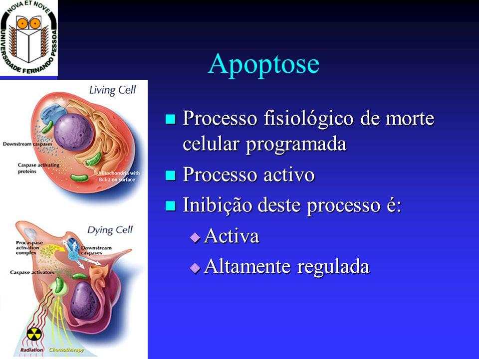 Apoptose Processo fisiológico de morte celular programada