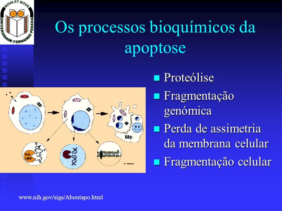 Os processos bioquímicos da apoptose
