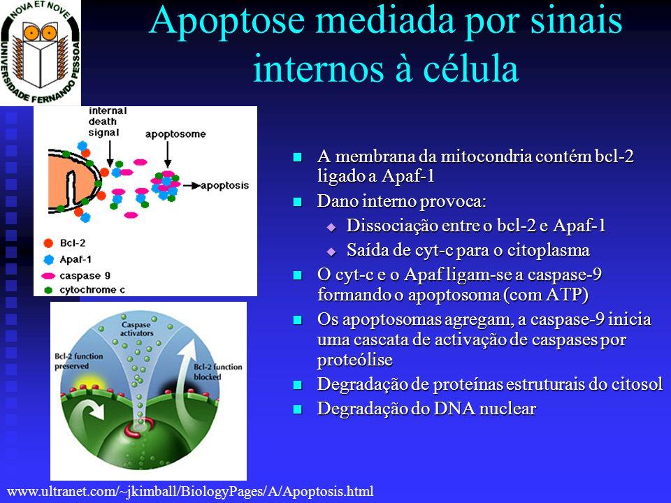 Apoptose mediada por sinais internos à célula