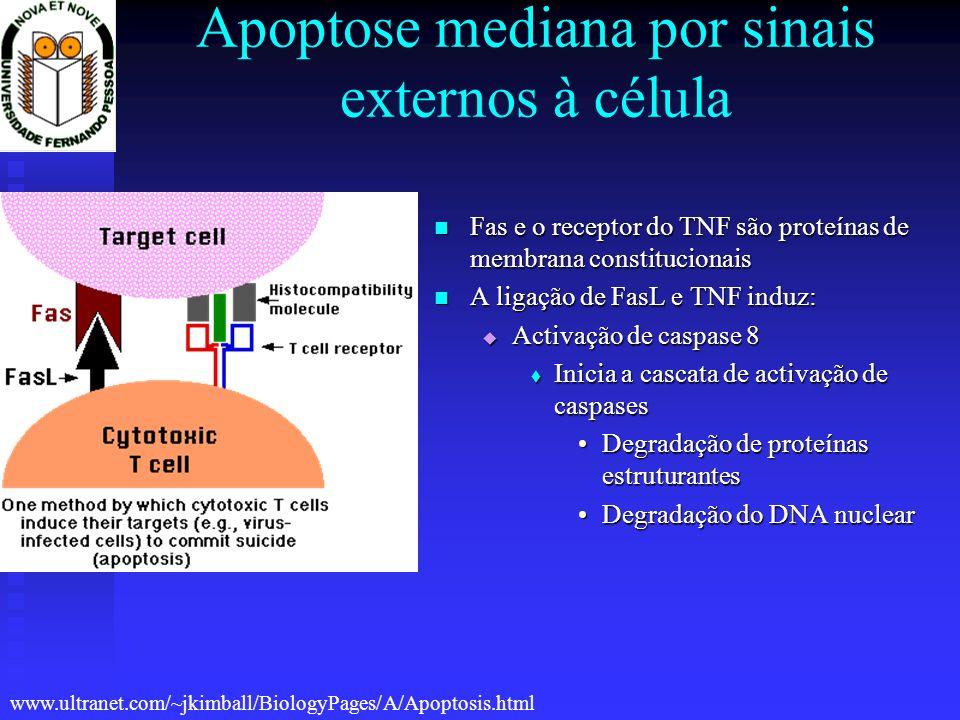 Apoptose mediana por sinais externos à célula