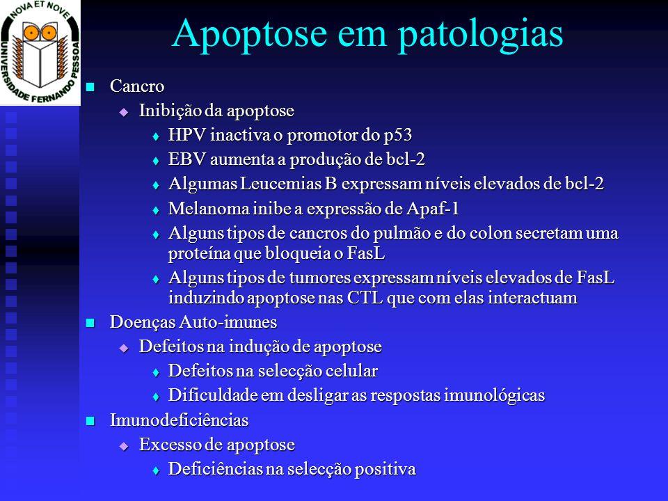 Apoptose em patologias