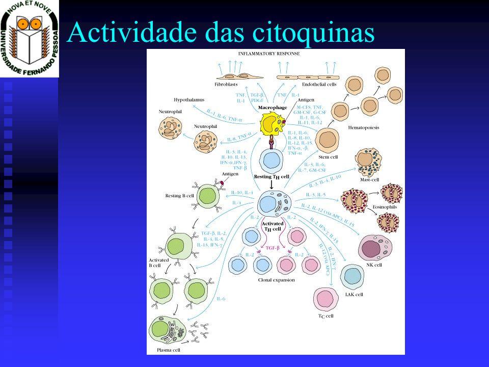 Actividade das citoquinas