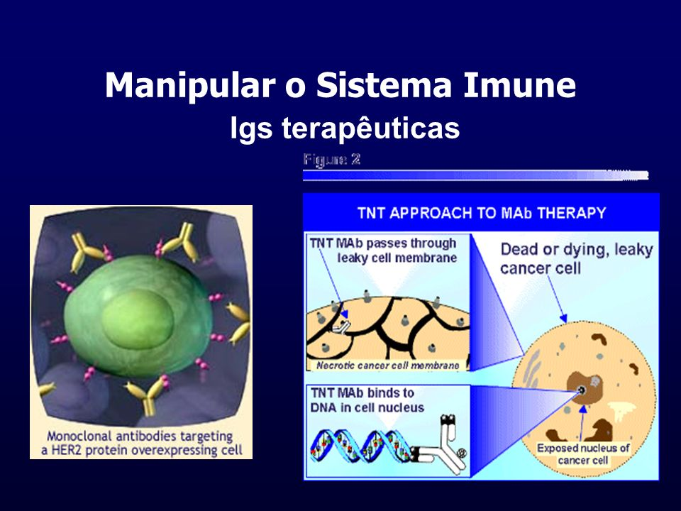 Manipular o Sistema Imune Igs terapêuticas