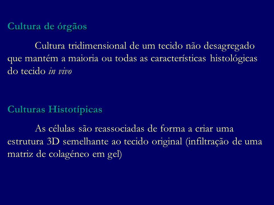 Cultura de órgãos Cultura tridimensional de um tecido não desagregado que mantém a maioria ou todas as características histológicas do tecido in vivo.