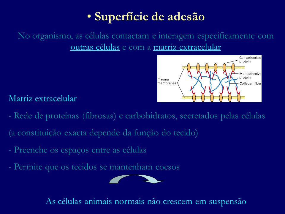As células animais normais não crescem em suspensão