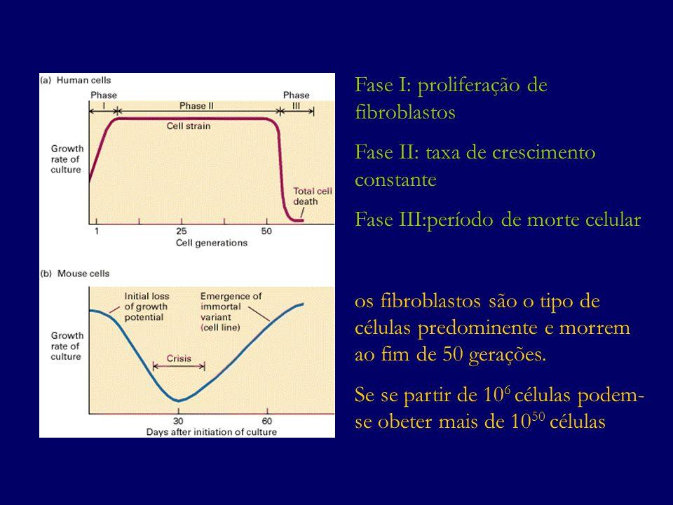 Fase I: proliferação de fibroblastos