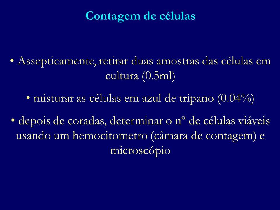 Assepticamente, retirar duas amostras das células em cultura (0.5ml)