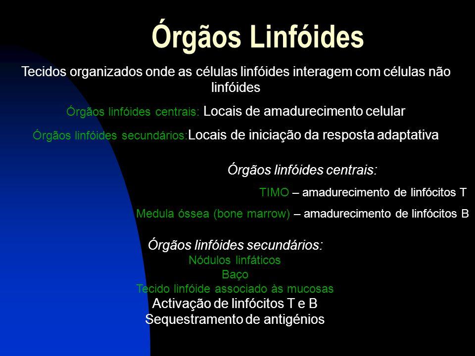Órgãos Linfóides Tecidos organizados onde as células linfóides interagem com células não linfóides.