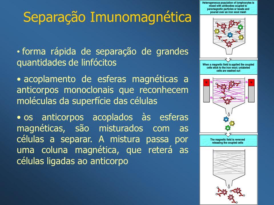 Separação Imunomagnética