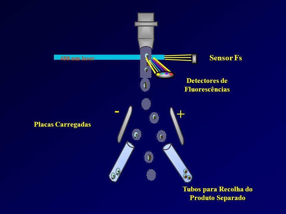 Tubos para Recolha do Produto Separado Detectores de Fluorescências