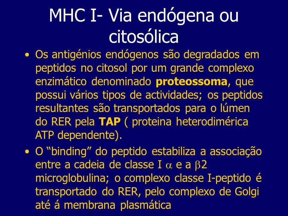 MHC I- Via endógena ou citosólica