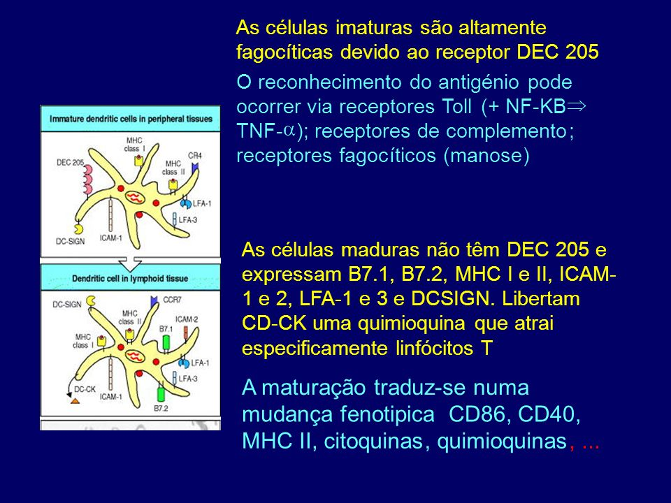 A maturação traduz-se numa mudança fenotipica CD86, CD40, MHC II,