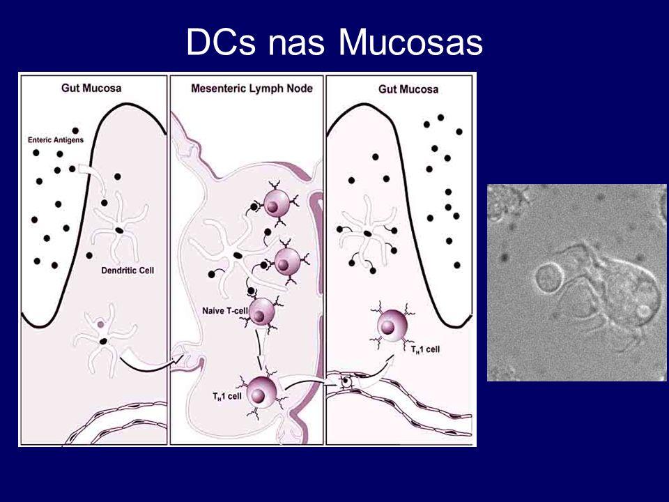 DCs nas Mucosas