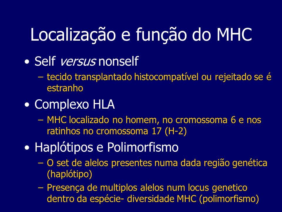 Localização e função do MHC