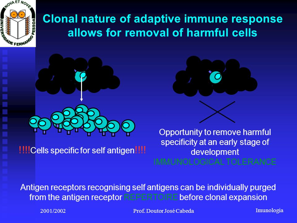 Clonal nature of adaptive immune response