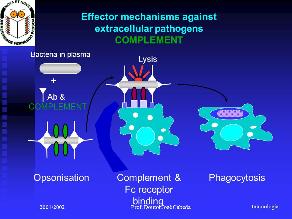 Effector mechanisms against extracellular pathogens